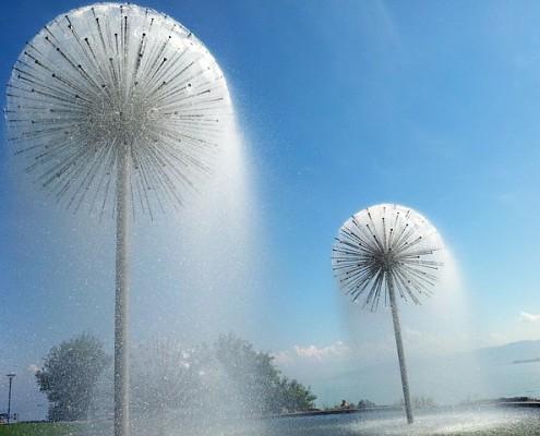 dandelion squirt water